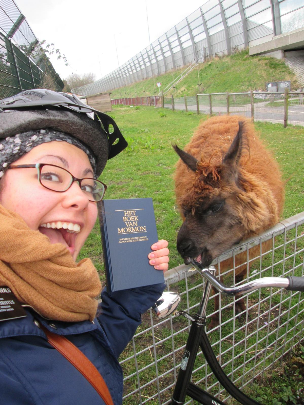 give llama BOM
